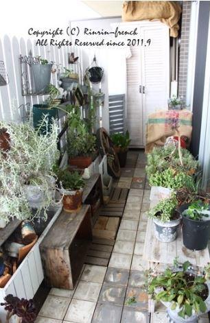 インドアグリーン 最近の我が家の観葉植物は・・・_e0237680_10440915.jpg