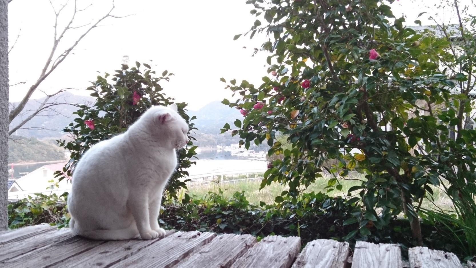 夕暮れ時の猫さんたち_f0197985_21140825.jpg