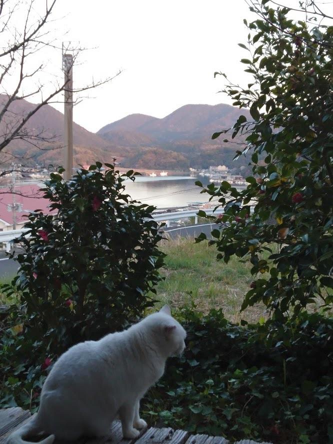 夕暮れ時の猫さんたち_f0197985_21141821.jpg