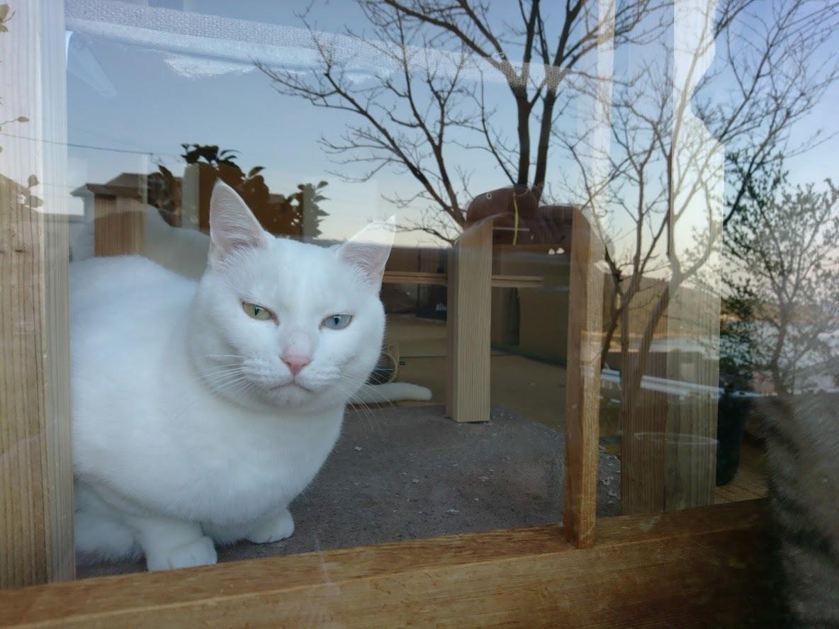 夕暮れ時の猫さんたち_f0197985_21161294.jpg