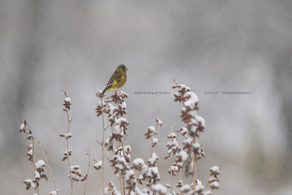 やっぱり来た!春の雪_d0164892_21253206.jpg