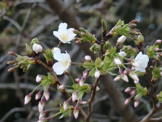 春うらら   11_b0239402_15112944.jpg