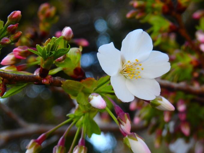 春うらら   11_b0239402_15114649.jpg