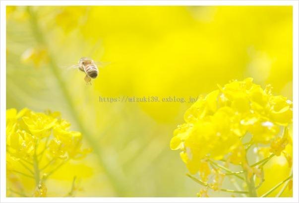 春色さがし(2)_c0091505_17101903.jpg