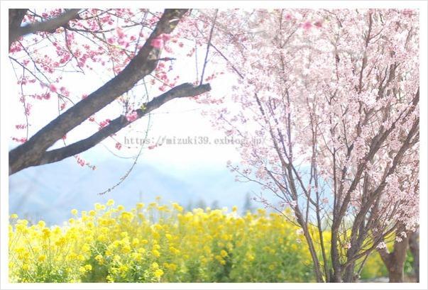 春色さがし(3)_c0091505_17104829.jpg
