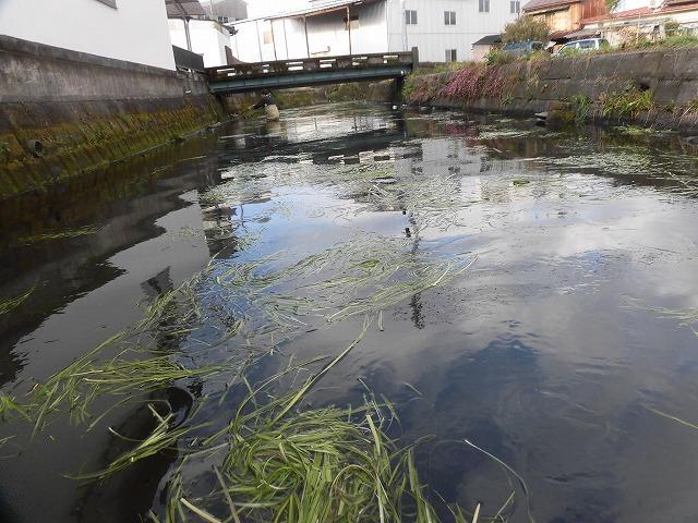「オオバン君、ありがとう!」 今年も飛来して水草を食べてくれ 今年最初の田宿川の川そうじ_f0141310_07452266.jpg