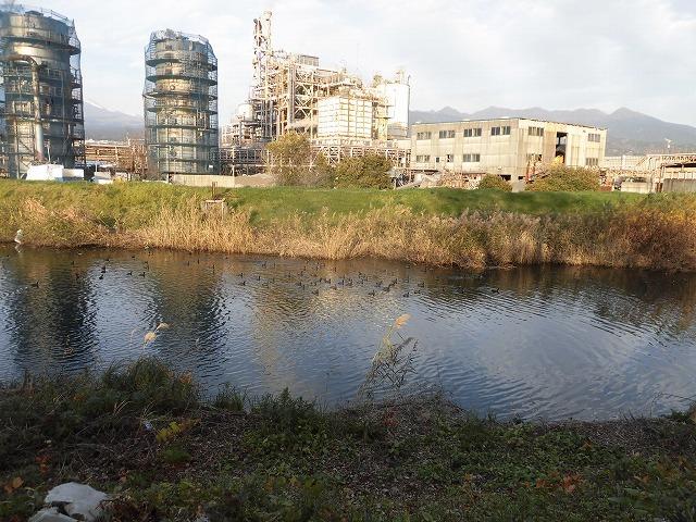 「オオバン君、ありがとう!」 今年も飛来して水草を食べてくれ 今年最初の田宿川の川そうじ_f0141310_07454368.jpg