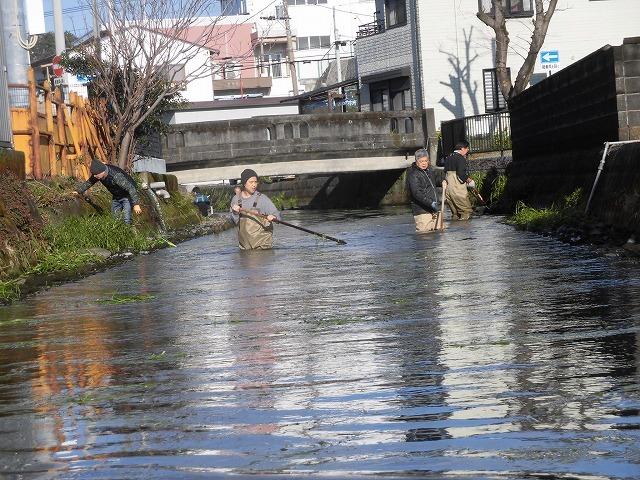 「オオバン君、ありがとう!」 今年も飛来して水草を食べてくれ 今年最初の田宿川の川そうじ_f0141310_07460361.jpg