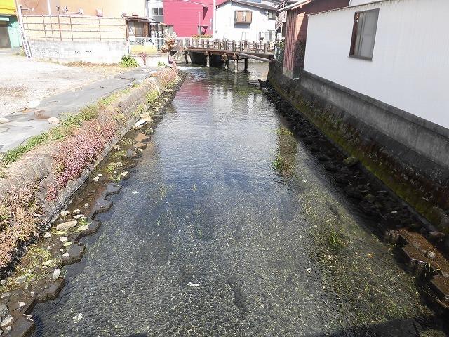「オオバン君、ありがとう!」 今年も飛来して水草を食べてくれ 今年最初の田宿川の川そうじ_f0141310_07464745.jpg