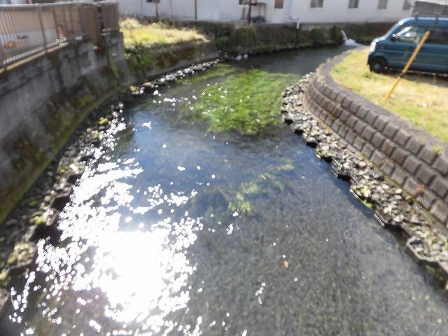 「オオバン君、ありがとう!」 今年も飛来して水草を食べてくれ 今年最初の田宿川の川そうじ_f0141310_07465597.jpg