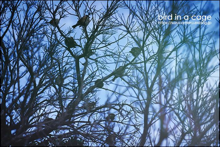 かごの鳥_f0100215_22524027.jpg