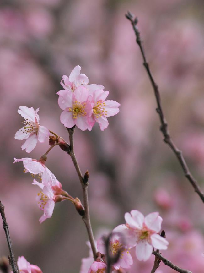 明日香・立部の春_b0408917_10442638.jpg