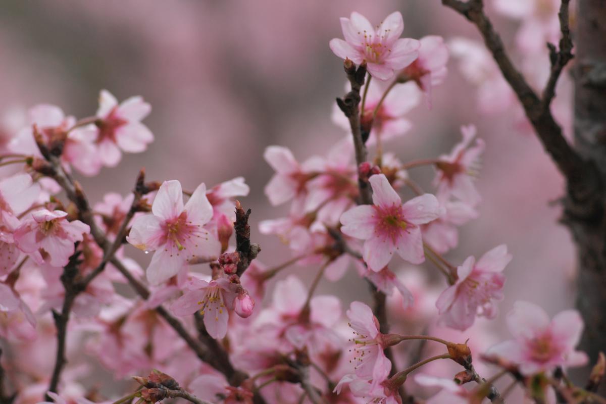 明日香・立部の春_b0408917_10445049.jpg