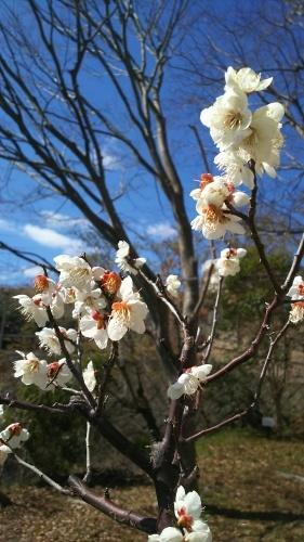 花で感じる春到来_e0069822_10575417.jpg