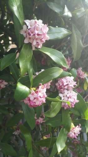 花で感じる春到来_e0069822_10591035.jpg