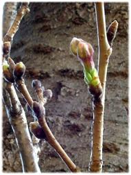 3月18日 今日の目黒川の桜_d0221430_20564489.jpg