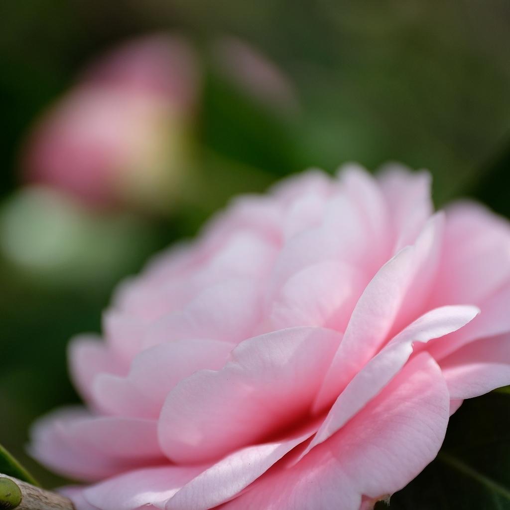 花の精_f0050534_07520142.jpg