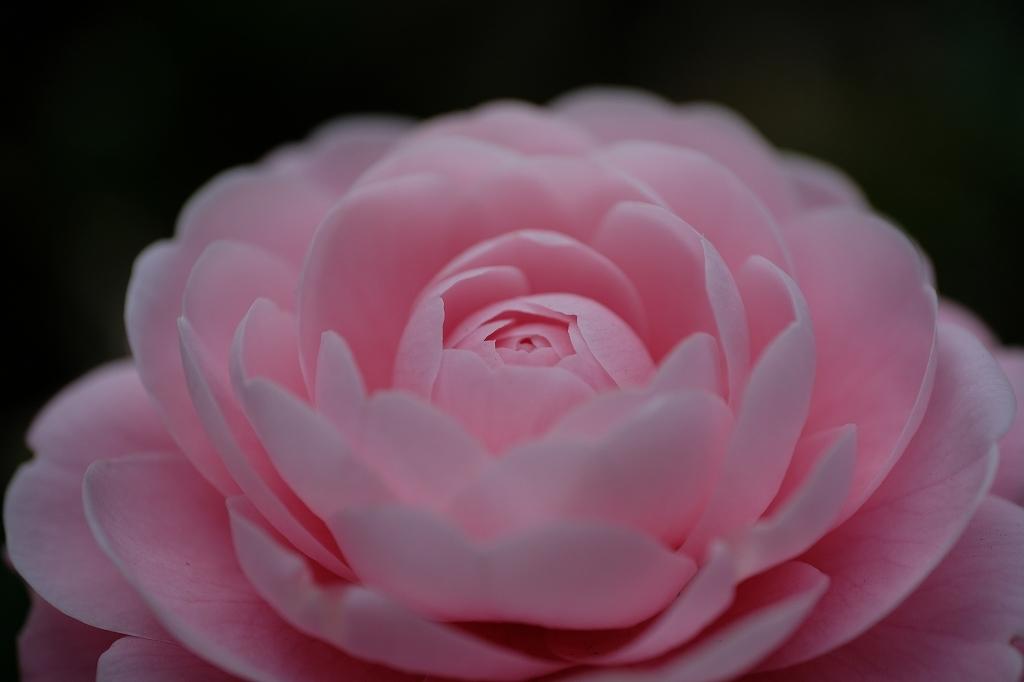 花の精_f0050534_07520176.jpg