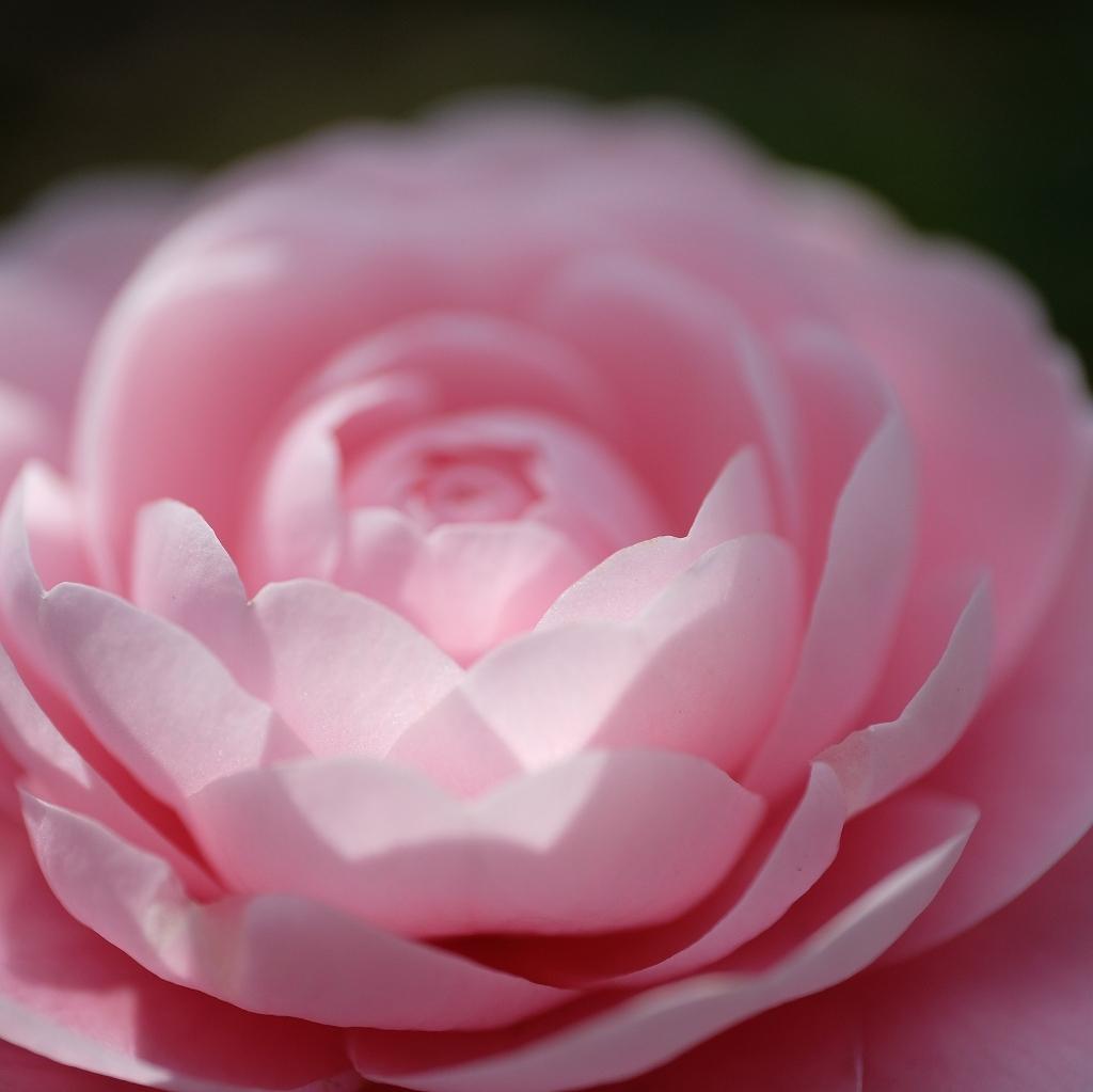 花の精_f0050534_07520252.jpg