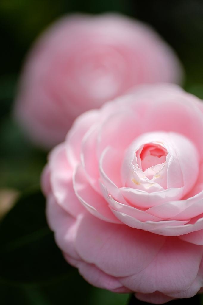 花の精_f0050534_07520297.jpg