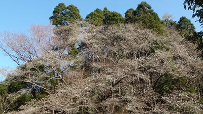 桜はまだか・・_a0123836_16055471.jpg
