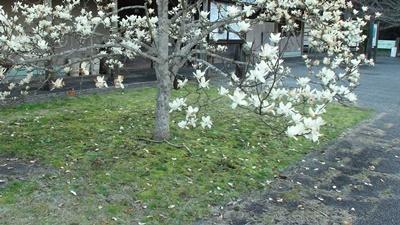 桜はまだか・・_a0123836_16060091.jpg