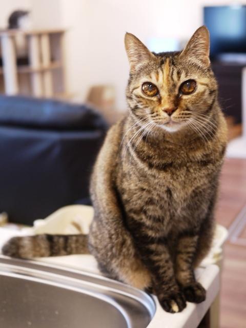 猫のお留守番 天ちゃん麦くん茶くん〇くんAoiちゃん編。_a0143140_20585509.jpg