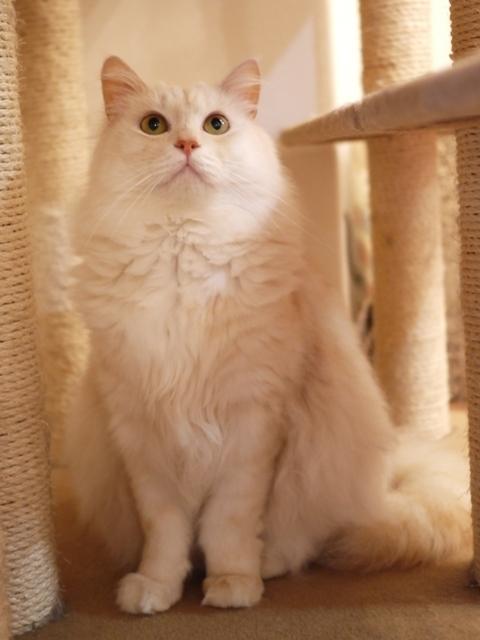 猫のお留守番 天ちゃん麦くん茶くん〇くんAoiちゃん編。_a0143140_20591810.jpg