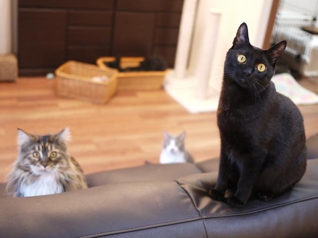 猫のお留守番 天ちゃん麦くん茶くん〇くんAoiちゃん編。_a0143140_20594439.jpg