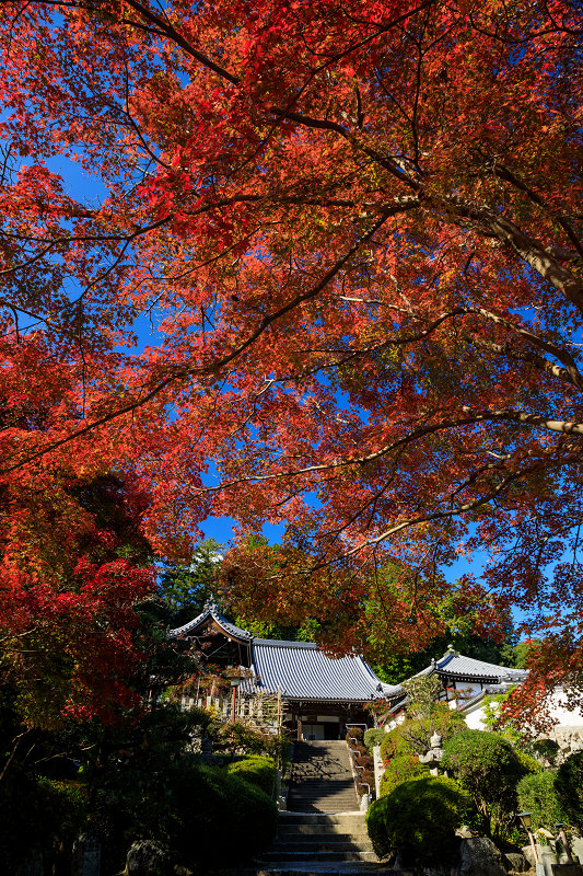紅葉が彩る奈良2019 九品寺の秋景色_f0155048_041977.jpg