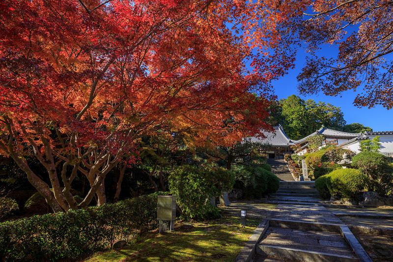 紅葉が彩る奈良2019 九品寺の秋景色_f0155048_04313.jpg