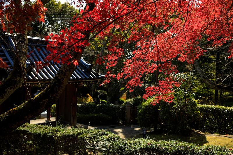 紅葉が彩る奈良2019 九品寺の秋景色_f0155048_053661.jpg