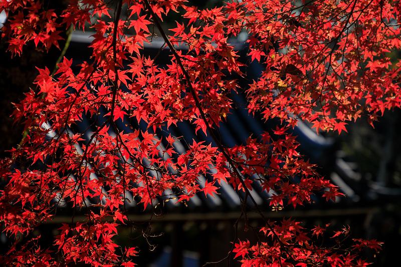 紅葉が彩る奈良2019 九品寺の秋景色_f0155048_05415.jpg