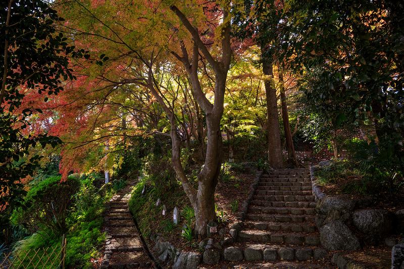 紅葉が彩る奈良2019 九品寺の秋景色_f0155048_055440.jpg