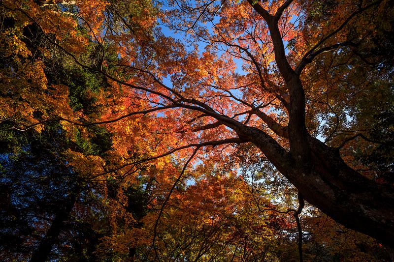 紅葉が彩る奈良2019 九品寺の秋景色_f0155048_061040.jpg