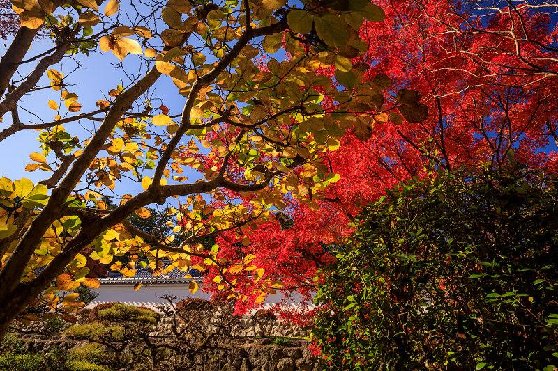 紅葉が彩る奈良2019 九品寺の秋景色_f0155048_063175.jpg