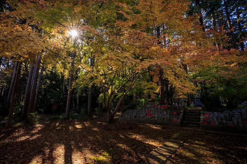 紅葉が彩る奈良2019 九品寺の秋景色_f0155048_06551.jpg
