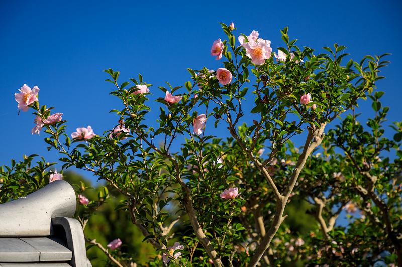 紅葉が彩る奈良2019 九品寺の秋景色_f0155048_07175.jpg