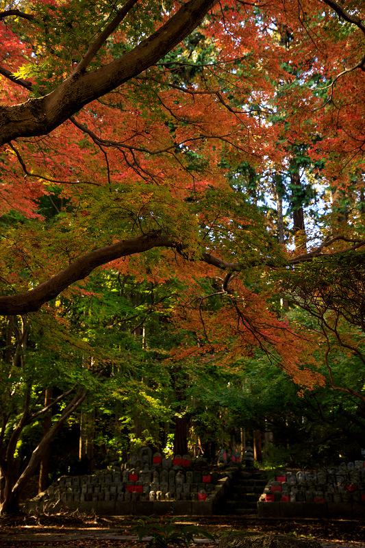 紅葉が彩る奈良2019 九品寺の秋景色_f0155048_07313.jpg