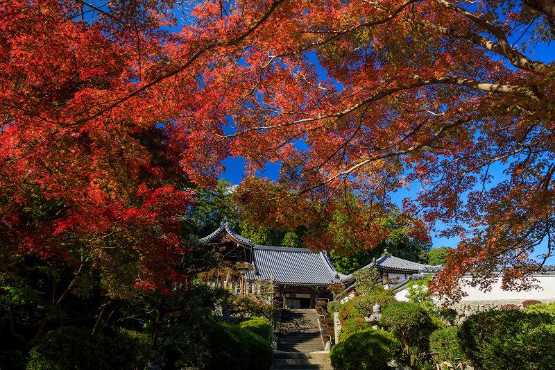 紅葉が彩る奈良2019 九品寺の秋景色_f0155048_073787.jpg