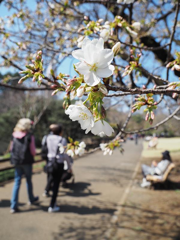 春ですよー_a0003650_22152279.jpg