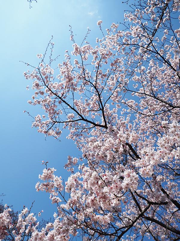 春ですよー_a0003650_22160602.jpg