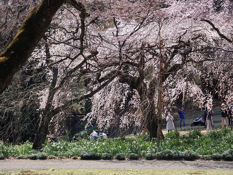 春ですよー_a0003650_22172084.jpg