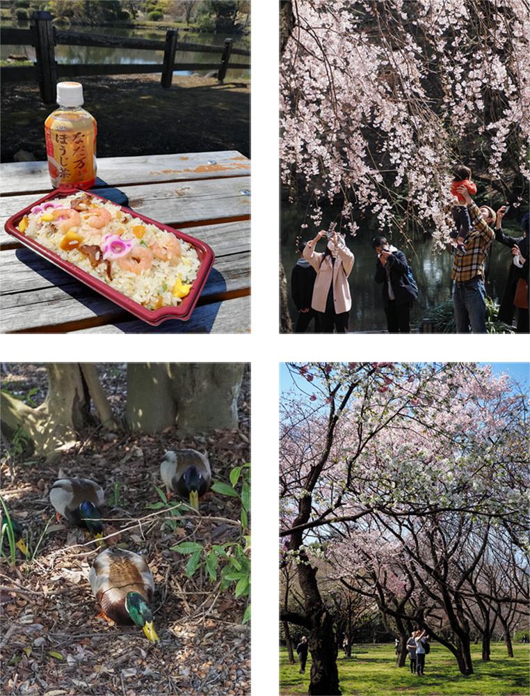 春ですよー_a0003650_22174594.jpg