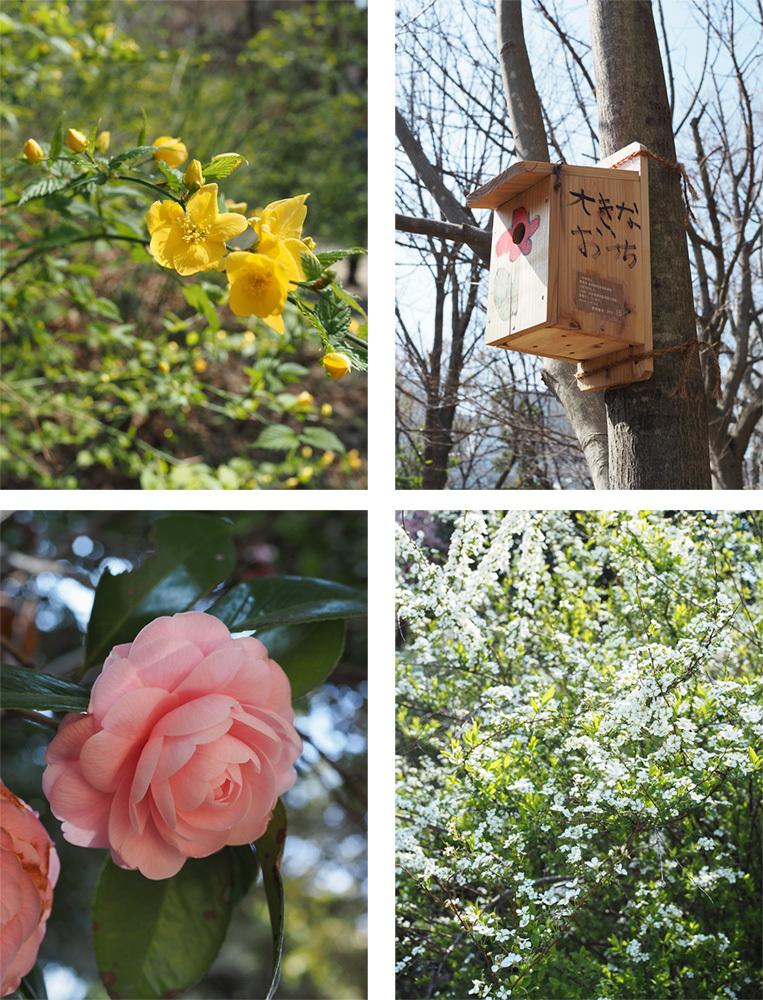 春ですよー_a0003650_22184925.jpg