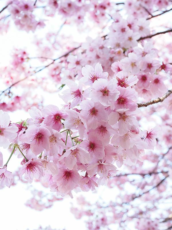 春ですよー_a0003650_22192141.jpg