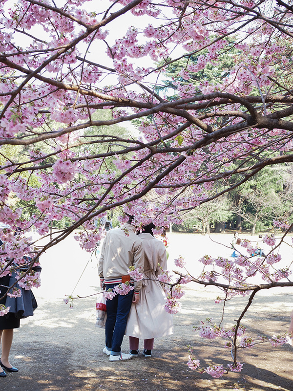 春ですよー_a0003650_22195990.jpg