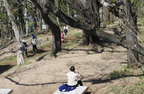 夫桜はほぼ満開、妻桜が開花3・18六国見山夫婦桜now_c0014967_17151698.jpg