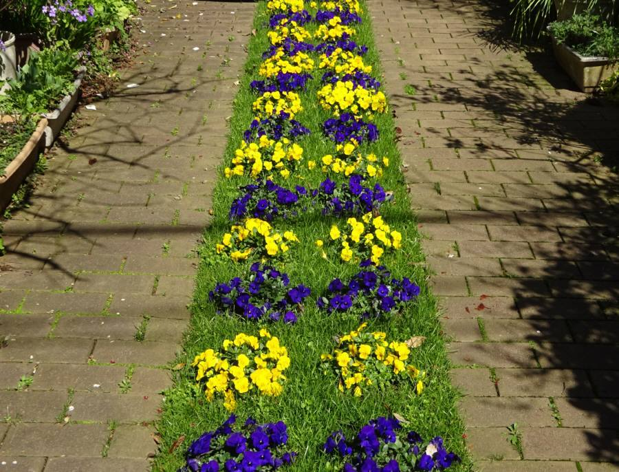庭の花 春_f0059673_23383303.jpg