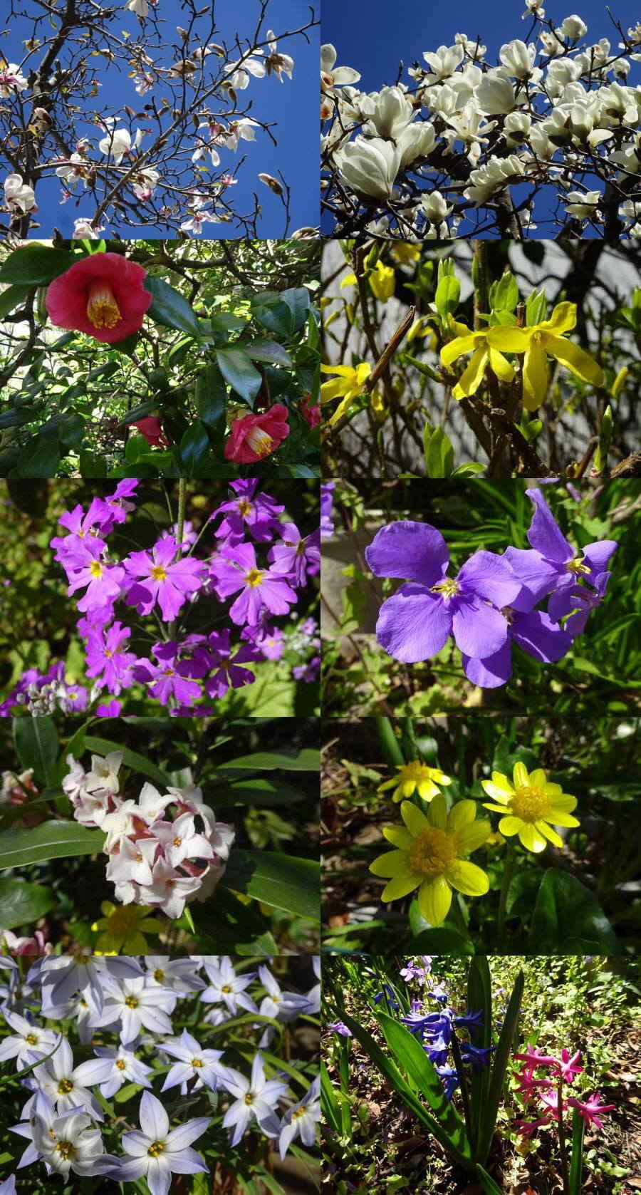 庭の花 春_f0059673_23384383.jpg